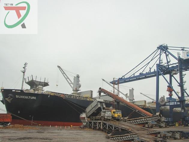 Dây băng tải dăm gỗ - hethongbangtai.vn